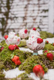 Strawberry Dessert. A delicious strawberry fluff dessert set up among natural moss and fresh picked strawberries with a rustic wooden background Royalty Free Stock Images