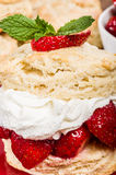 Strawberry dessert with whipped cream Stock Photos
