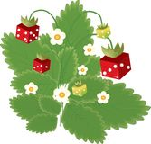 Strawberry and dice. Strawberry with red and green dice, with flowers. Vector illustration vector illustration
