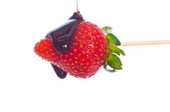 Strawberry dipped in  chocolate. Stock Images
