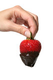Strawberry Dipped in Chocolate Stock Images