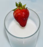 Strawberry drop on milk glass Royalty Free Stock Photography