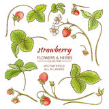 Strawberry. Elements vector set on white background Royalty Free Stock Photography