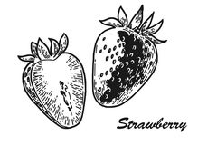 Strawberry engraved sketch. Sketch of strawberry. Vintage black engraving illustration for web, poster. Hand drawn design element isolated on white background royalty free illustration