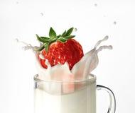 Strawberry falling into a glass mug full of milk, splashing. Royalty Free Stock Image