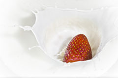 The strawberry falling in milk Stock Photography