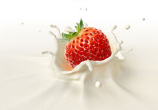 Strawberry falling into milk splashing. Close up view, On white background Stock Image