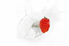Strawberry falling into the milky splash Royalty Free Stock Photos