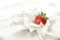 Strawberry falling into a sea of milk, causing a splash. Stock Photography