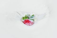 Strawberry falling into splashing milk.  Isolated on white. Royalty Free Stock Photos