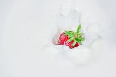 Strawberry falling into splashing milk.  Isolated on white. Stock Photos
