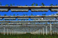 Strawberry farm. Modern strawberry farm against blue sky royalty free stock images