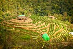 Strawberry farm on hilltop thailand Stock Image