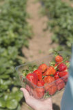 At the strawberry farm Royalty Free Stock Images