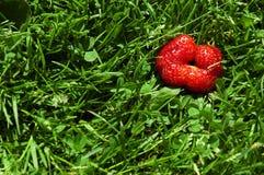 Strawberry feel Stock Photo