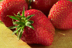 Strawberry fever. Big juicy strawberry Stock Photos