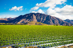 Strawberry Field and Mountains Royalty Free Stock Photography