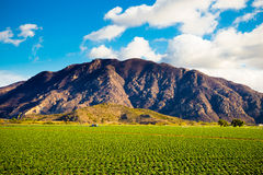 Strawberry Field and Mountains Stock Image