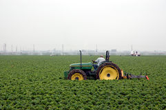 Strawberry field and tractor. Man driving tractor in a strawberry field royalty free stock photo