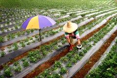 Strawberry Fields Immagini Stock Libere da Diritti