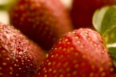 Strawberry fields. Close-up of a few strawberries Royalty Free Stock Images