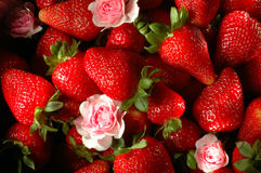 Strawberry fields forever. A lot of strawberries and roses stock photography