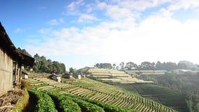 Strawberry fields. HD stock video