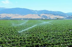 Strawberry Fields in Salinas Valley Stock Photo