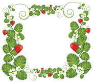 Strawberry floral frame Stock Photos