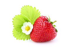 Strawberry with a flower and a leaf. Stock Photos