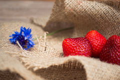 Strawberry. With flower on a napkin stock image
