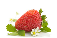 Strawberry and flowers Royalty Free Stock Image