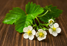 Strawberry flowers with green leaves Royalty Free Stock Images