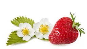 Strawberry with flowers Royalty Free Stock Photos