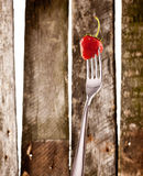 Strawberry on fork Stock Photography