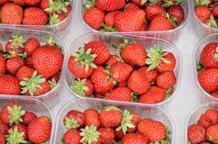 Strawberry - fragaria vesca. Royalty Free Stock Images