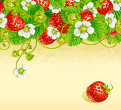 Strawberry frame 3. Red berry and white flower. Vector strawberry frame. Red berry and white flower royalty free illustration