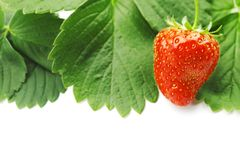 Strawberry frame Royalty Free Stock Image