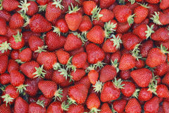 Strawberry. Fresh strawberry close up Stock Image