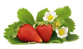 Strawberry. Fresh strawberry fruits with flowers and green leaves  on white background Stock Images