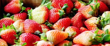 Strawberry fresh fruits Royalty Free Stock Photography