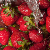 Strawberry fresh Royalty Free Stock Photography