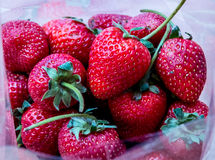 Strawberry. Fresh Strawberry in plastic bag Stock Photography