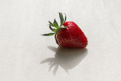 Strawberry. Fresh red Strawberry with light background with shadow Royalty Free Stock Images