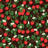 Strawberry fruit branch seamless pattern Royalty Free Stock Photos