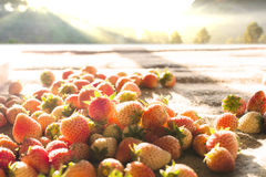 Strawberry Fruit Stock Images