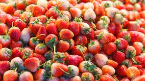 Strawberry Fruit Garden Strawberries with its aroma, bright red color, juicy texture, and sweetness, is eaten fresh or used in. Prepared foods and artificial royalty free stock photography