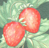 Strawberry fruit  growing fresh oil painting artistic. Fruit strawberry garden plant harvest  summer planting textured water color painting Royalty Free Stock Photos