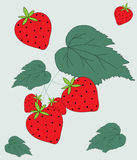 Strawberry Fruit & Leaves Illustration Stock Photos