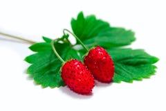 Strawberry fruit macro Stock Photos